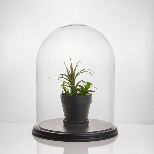 "Glass Dome - Large - 12"" x 16-1/2""H"